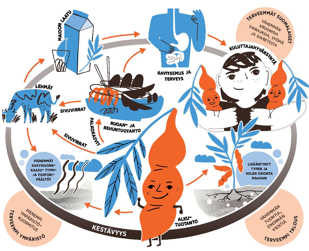 Leg4Life-hankkeen infograafi, joka kuvaa hankkeen tutkimustyötä palkokasvien viljelyn, rehu- ja elintarvikekäytön, prosessoinnin ja terveysvaikutusten suhteen.