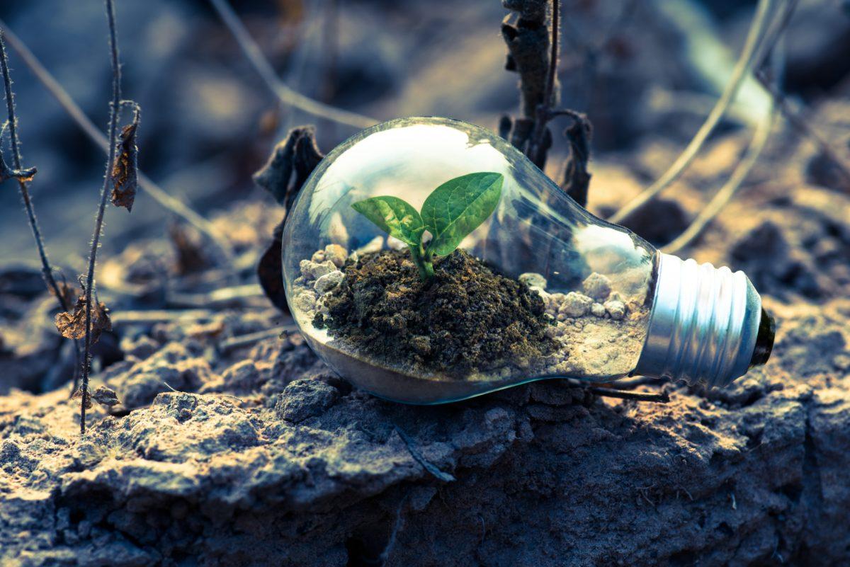 Lampun sisällä versoo uusi taimi karussa ympäristössä.