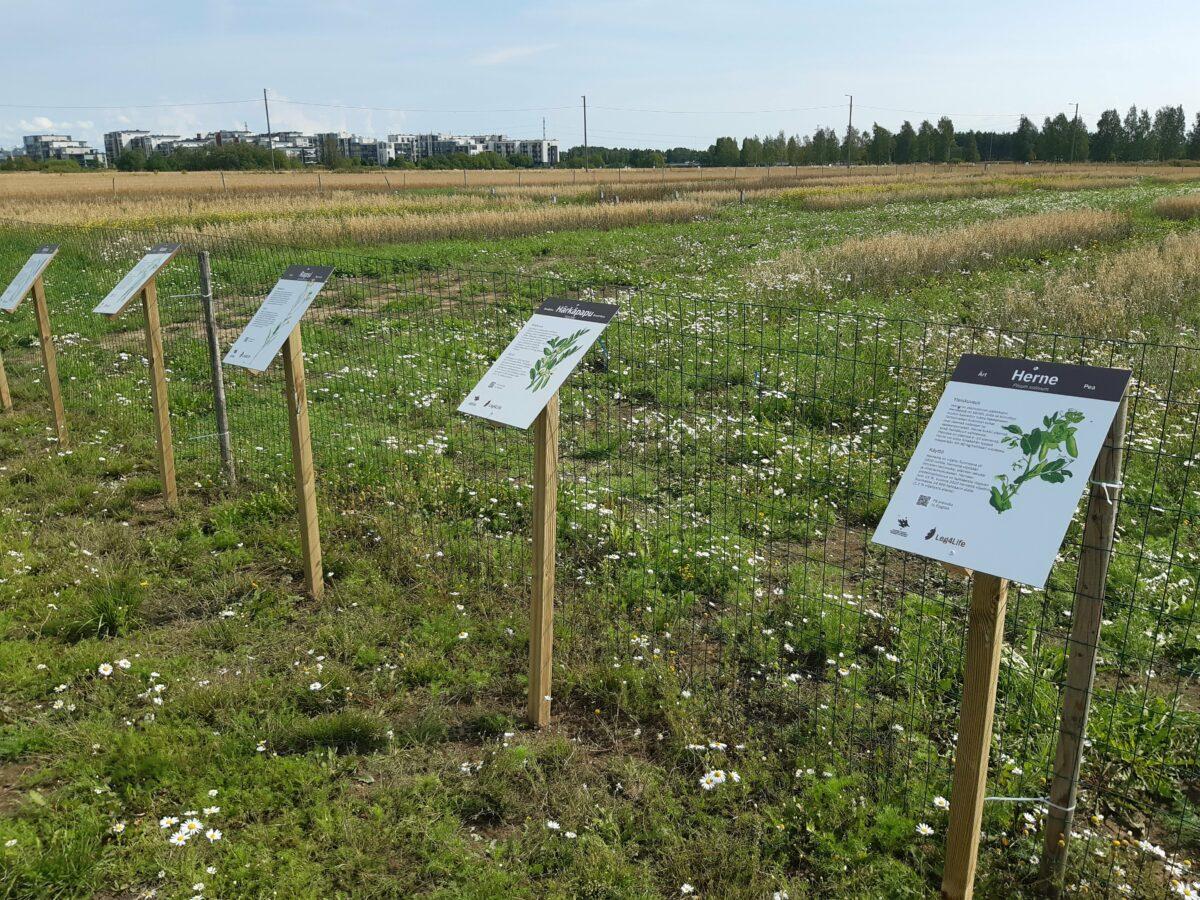 Leg4Life-hankkeen koelohkolla olevat kasvilajikyltit esittelevät alueella tutkittavat kasvilajit, joita ovat herne, härkäpapu, vehnä, kaura, raiheinä ja rapsi
